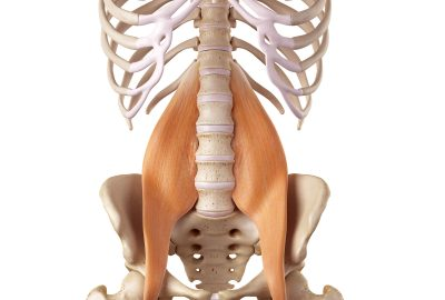 Realease the Psoas Muscle at the Core Zone Banbury